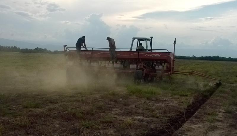 Labores de siembra directa de sorgo azucarado en la localidad de Graneros, Tucumán. Foto gentileza CAPP.